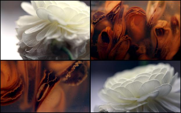 http://antihelios.de/indexhibit-photo/files/gimgs/31_collage1.jpg
