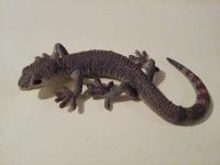 130_gecko.jpg