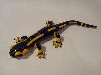 130_salamander.jpg